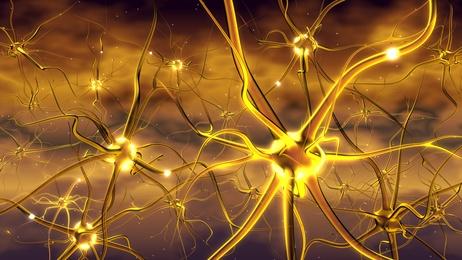Neuronen im Bild